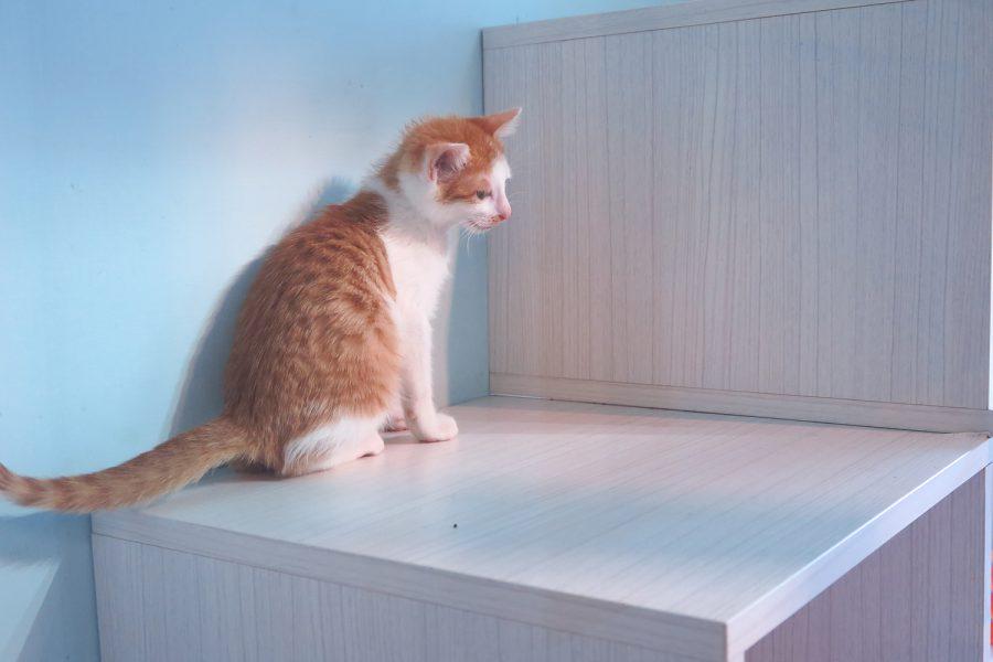 [臺北] 出國時的臺北貓旅館推薦——貓咪遊樂園!